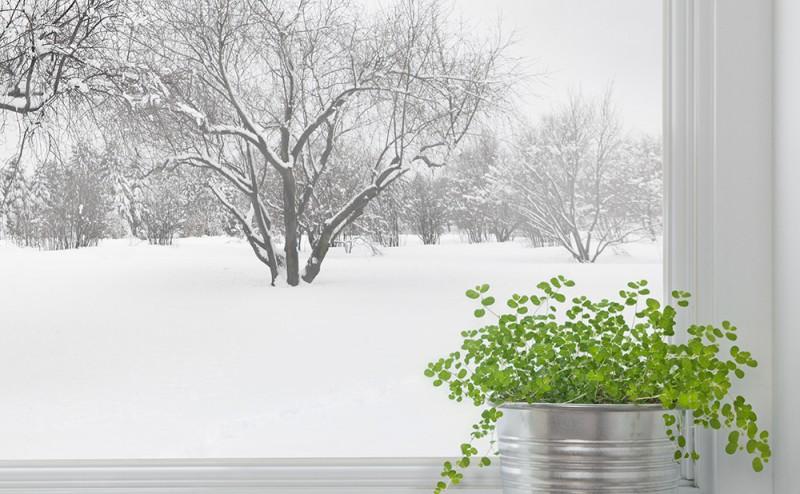 Balkonpflanzen Im Winter Maax Design Blog Uber Design Im